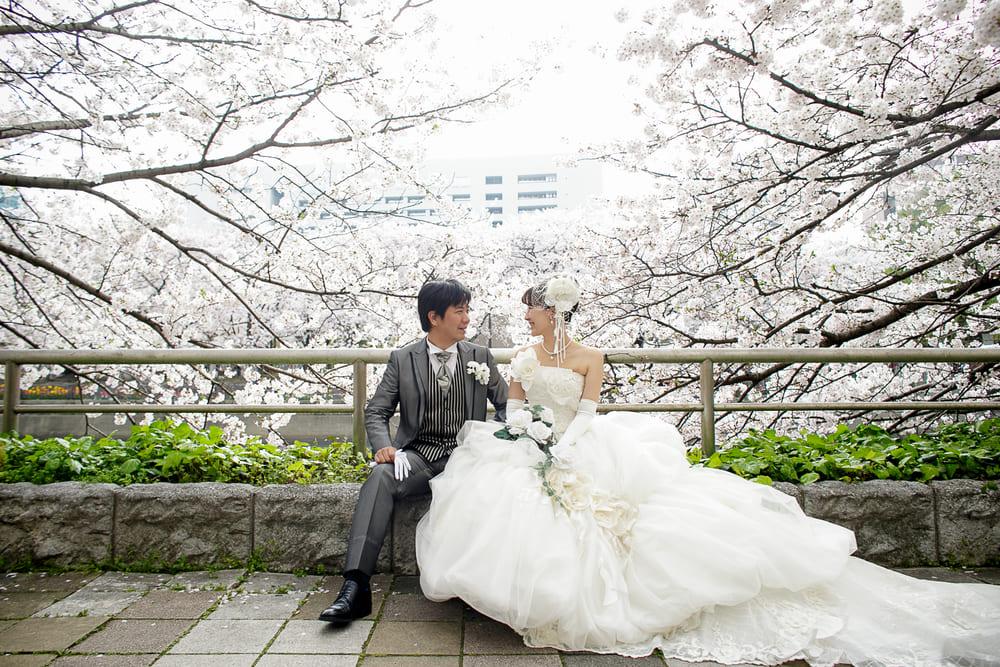 福岡県福岡市中央区天神1丁目1・川沿いにはたくさんの桜が植えてあり、桜の名所として春の撮影が大人気